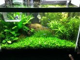 Betta fish planted tank