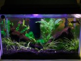Betta fish tank plants