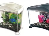 Betta fish Tanks with heater