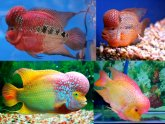 Cool colorful fish