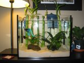 Cute Betta fish Tanks
