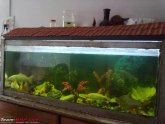 Fighter fish breeding tank