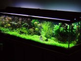 Live plants for Betta fish tank