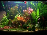 Plants for Betta fish tank